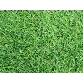 SEEDS OF GRAMIGNONE FOR LAWN CARPET GRASS KG. 10