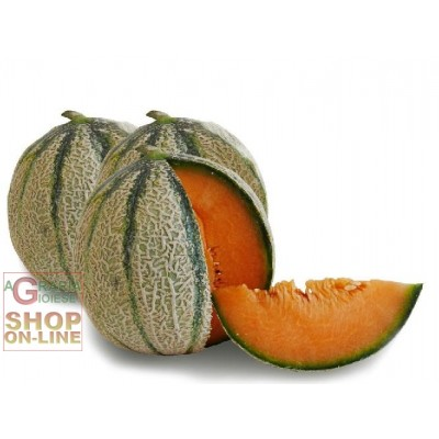 SEEDS OF MELON NET OF THE ORTOLANI