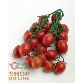 PRINCIPE BORGHESE TOMATO SEEDS TO HANG