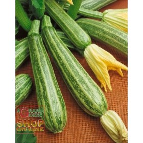 STRIPED ZUCCHINO SEEDS OF ITALY