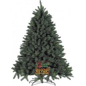 SIBERIAN PINE CHRISTMAS TREE