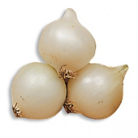 WHITE ONION BULBS SILVERMOON GR. 500