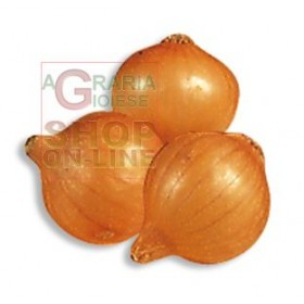 BEAUTIFUL PICKO ONION BULBS MM. 14/21 KG. 0.500