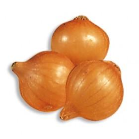 STUTTGART ONION BULBS 21/24 KG. 1