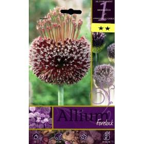 ALLIUM FORELOCK FLOWER BULBS N. 1