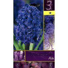 HYACINTHUS AIDA FLOWER BULBS N. 3
