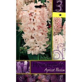 HYACINTHUS APRICOT PASSION FLOWER BULBS N. 3
