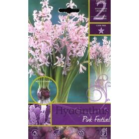 HYACINTHUS PINK FESTIVAL FLOWER BULBS N. 2