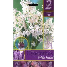 HYACINTHUS WHITE FESTIVAL FLOWER BULBS N. 2