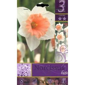 NARCISSUS FAITH FLOWER BULBS N. 3
