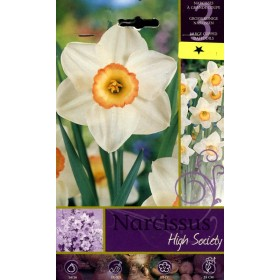 NARCISSUS HIGHT SOCIETY FLOWER BULBS N. 3