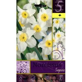 NARCISSUS SEGOVIA FLOWER BULBS N. 5