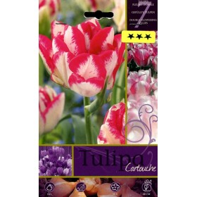 CARTOUCHE TULIPA FLOWER BULBS N. 7