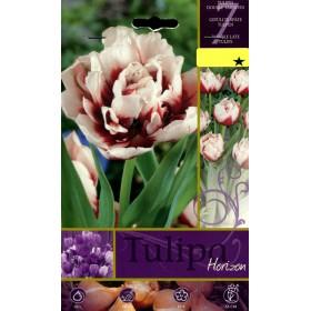 HORIZON TULIPA FLOWER BULBS N. 7