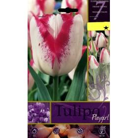 PLAYGIRL TULIP FLOWER BULBS N. 7