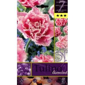 QUEENSLAND TULIPA FLOWER BULBS N. 7