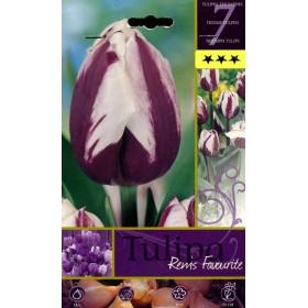 FLOWER BULBS TULIPA RENIS FOVOURITE N. 7