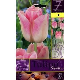 SHOWBIZZ TULIP FLOWER BULBS No. 7