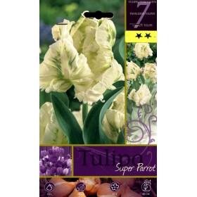 SUPER PARROT TULIP FLOWER BULBS N. 7