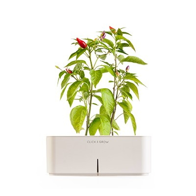 CLICK AND GROW STARTER KIT CHILLI