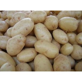 DUTCH ORIGINAL SEED POTATOES KG. 25