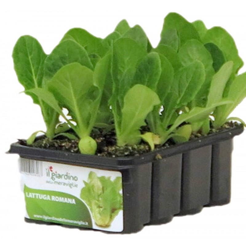 piantine orticole piante da orto